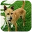 Photo 2 - Chihuahua/Jack Russell Terrier Mix Dog for adoption in El Cajon, California - spice
