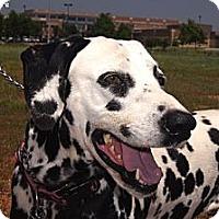 Adopt A Pet :: Gisele - Newcastle, OK