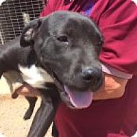 Adopt A Pet :: Marla - Childress, TX