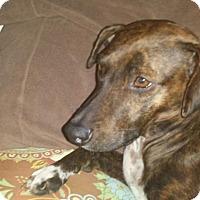 Adopt A Pet :: Sienna - Brick, NJ