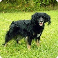 Adopt A Pet :: Stella - Franklin, VA