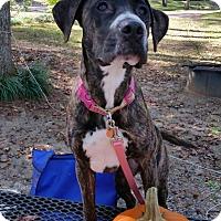 Adopt A Pet :: Keeva - Knoxville, TN