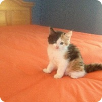 Adopt A Pet :: Margarita - Fredericksburg, VA