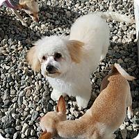 Adopt A Pet :: KATIE - Winnetka, CA