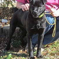 Adopt A Pet :: Thomas - Richburg, SC