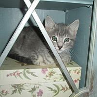 Adopt A Pet :: Mila - San Bernardino, CA