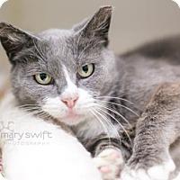 Adopt A Pet :: Emma Lee - Reisterstown, MD