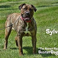 Adopt A Pet :: Sylvia - Belleville, MI