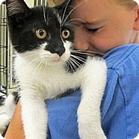 Adopt A Pet :: Wally - Riverhead, NY