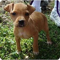 Adopt A Pet :: Jazzy - Plainfield, CT