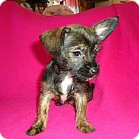 Adopt A Pet :: Tiny - Staunton, VA