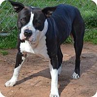 Adopt A Pet :: Krista - Athens, GA