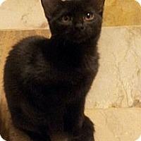 Adopt A Pet :: Lilo - Chandler, AZ
