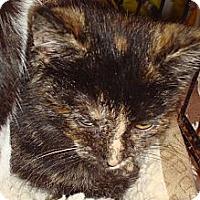Adopt A Pet :: Chestnut - Brooklyn, NY