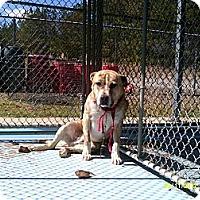 Adopt A Pet :: Samuel - Dundas, VA