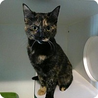Adopt A Pet :: Tipsy - Hamilton, ON