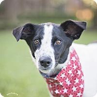 Adopt A Pet :: Shelby - Kingwood, TX