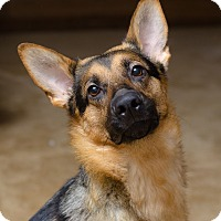Adopt A Pet :: Wanda - Dacula, GA