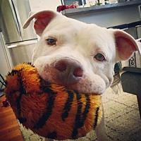 Adopt A Pet :: Milo - Va Beach, VA