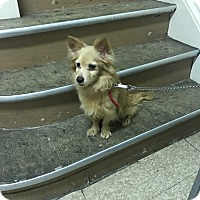 Adopt A Pet :: Rusty - staten Island, NY
