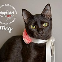 Adopt A Pet :: Meg - Pearland, TX