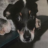 Adopt A Pet :: DANICA - Modesto, CA