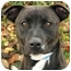 Photo 1 - American Staffordshire Terrier Dog for adoption in Chicago, Illinois - Katie