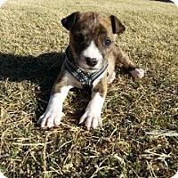 Adopt A Pet :: Marble - Only $95 adoption! - Litchfield Park, AZ
