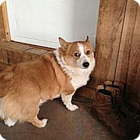 Adopt A Pet :: Tramp - Inola, OK