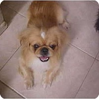 Adopt A Pet :: Koda - Cathedral City, CA