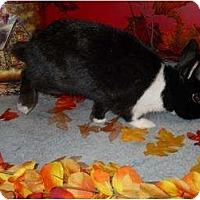 Adopt A Pet :: Matilda - Roseville, CA