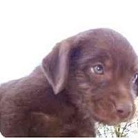 Adopt A Pet :: Tiny Tim - Glastonbury, CT