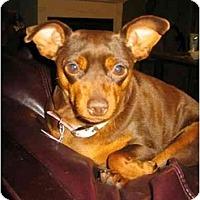 Adopt A Pet :: Ella - Swiftwater, PA