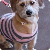 Adopt A Pet :: MARIGOLD - Fort Worth, TX