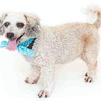 Adopt A Pet :: Mimi - Orlando, FL