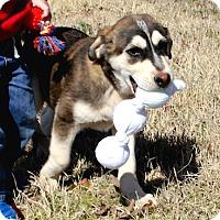 Adopt A Pet :: *Finn - PENDING - Westport, CT