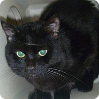 Adopt A Pet :: Midnight - Hamburg, NY