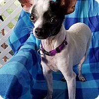 Adopt A Pet :: Alfalfa - Houston, TX