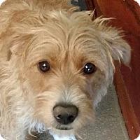 Adopt A Pet :: Lacie - Allentown, PA