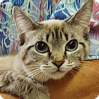 Adopt A Pet :: Prissy - Germantown, MD