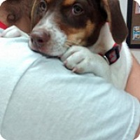 Adopt A Pet :: Truffle - Laredo, TX
