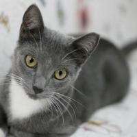 Adopt A Pet :: Pepper - Metairie, LA