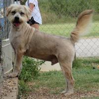 Adopt A Pet :: Willy - Wichita Falls, TX