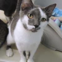 Adopt A Pet :: Jack - Westville, IN