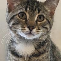 Adopt A Pet :: Otto - Cuba, NY