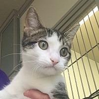 Adopt A Pet :: Mercury - Jackson, MI