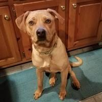Adopt A Pet :: Koco - Richmond, VA