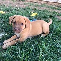 Adopt A Pet :: Bailey - Crestline, CA