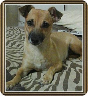 Terrier (Unknown Type, Small) Mix Dog for adoption in Madison, New Jersey - Panchita