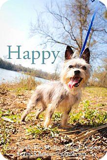 Yorkie, Yorkshire Terrier Dog for adoption in Aiken, South Carolina - Happy